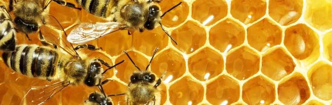 Bienenwachs – Vegan?